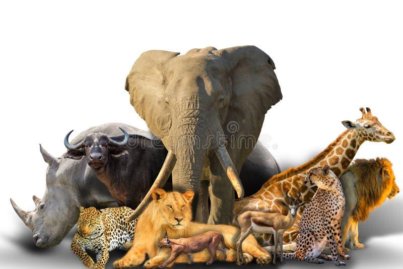 Afrykański zwierzę kolaż obrazy stock