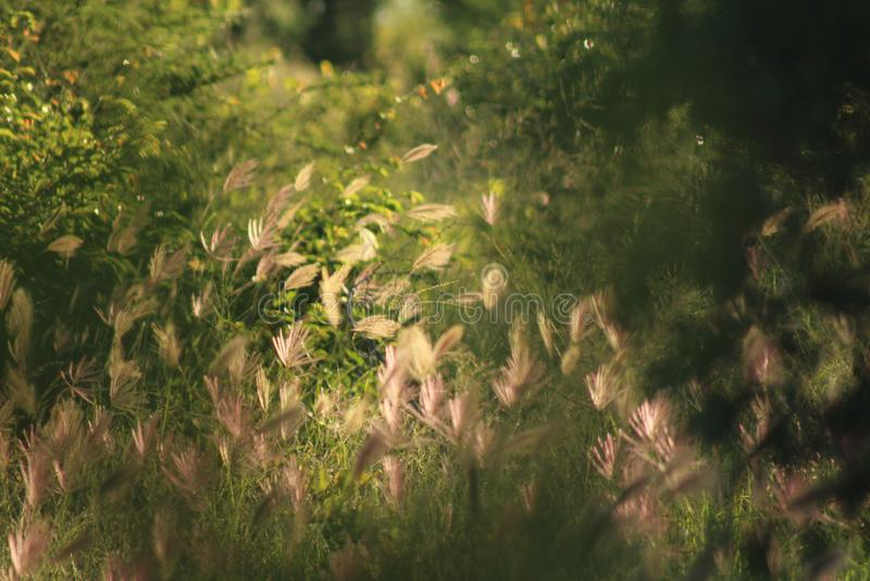 Afrykańskie dzikie trawy zdjęcia royalty free