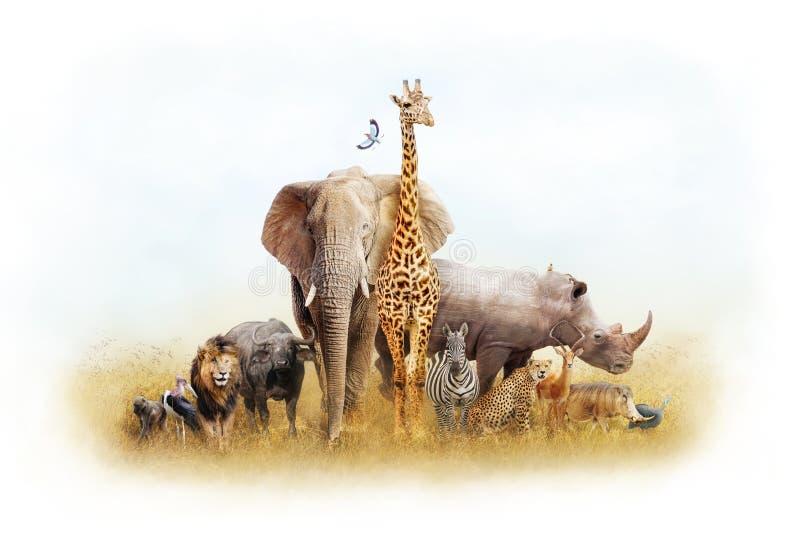 Afrykańskiego safari fantazi Zwierzęca ziemia fotografia royalty free