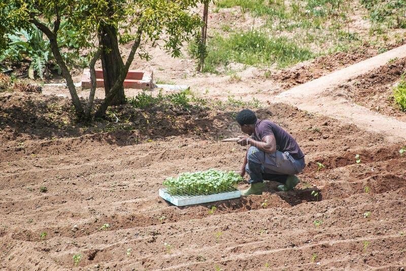 Afryka?ski murzyn pracuje w egzystencji uprawia? ziemi? cultive pusta kopii przestrze? zdjęcia stock