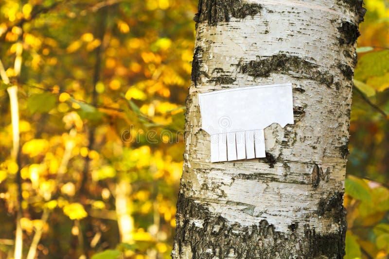Afscheuringsdocument bericht op berkboomstam stock foto