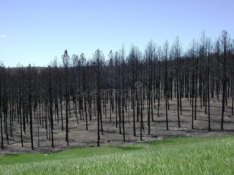 Aftermath Of 2000 Jasper Fire Free Public Domain Cc0 Image