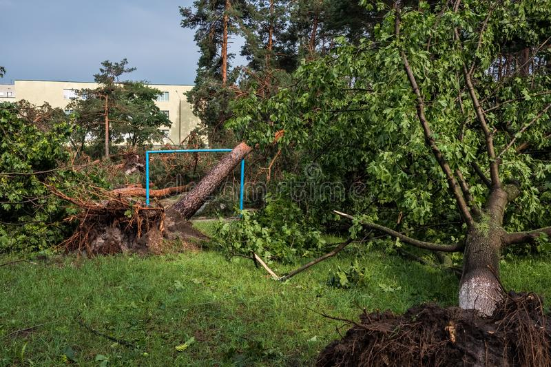 The aftermath of a hurricane. Broken trees in the park after the storm. Extreme weather concept stock photos