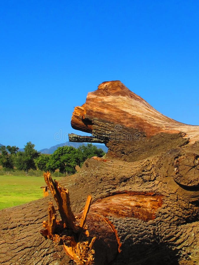 Aftermath of a rain storm. An old tree torn from the ground is being sawn into pieces royalty free stock photo