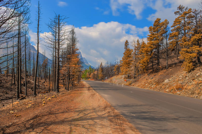 Aftermath 2015 Reynolds Creek Wildland Forest Fire Glacier National Park. Along Going to the Sun Road stock photos