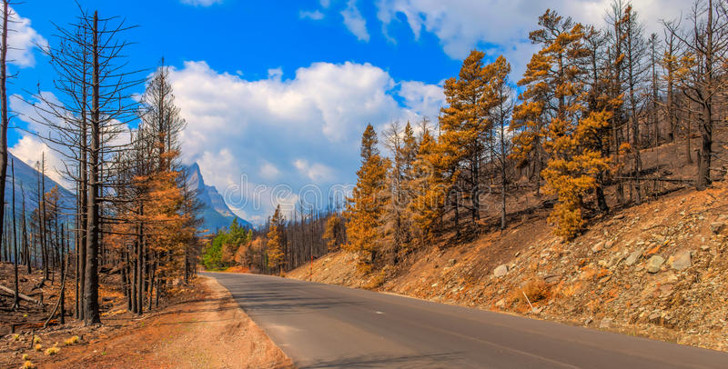 Aftermath 2015 Reynolds Creek Wildland Forest Fire Glacier National Park. Along Going to the Sun Road stock images