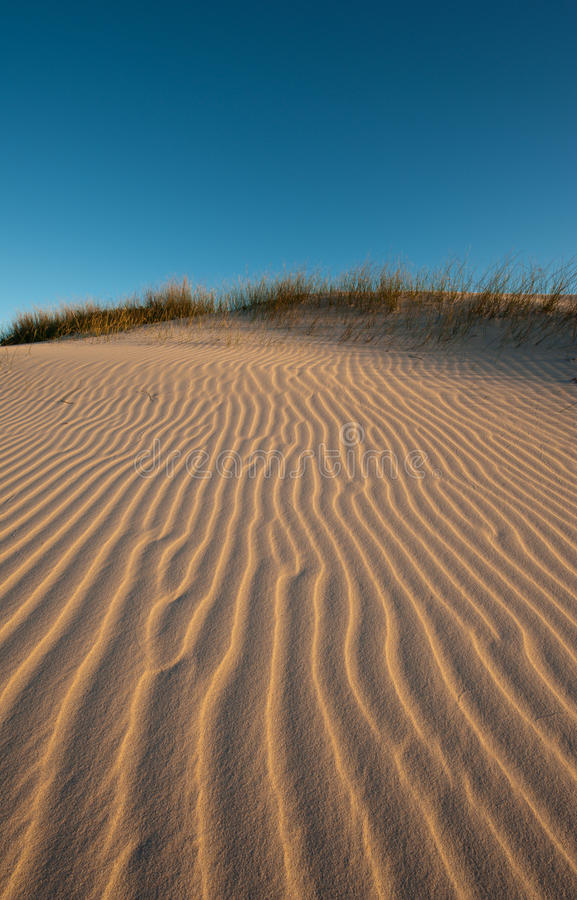 Free Afternoon Light On Dunes Royalty Free Stock Photos - 16077858