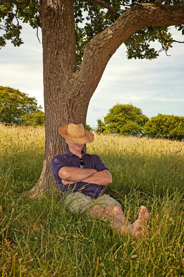 Afternoon nap on a hot summers day royalty free stock photo