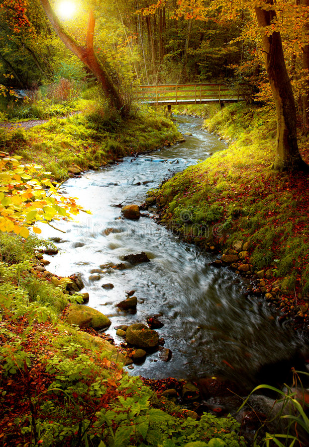 Download Afternoon sun in forest stock image. Image of autumn, landscape - 1980649