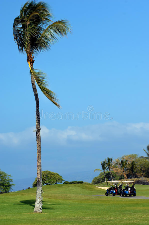 Download Afternoon Tee Off stock image. Image of resort, waiting - 13826397