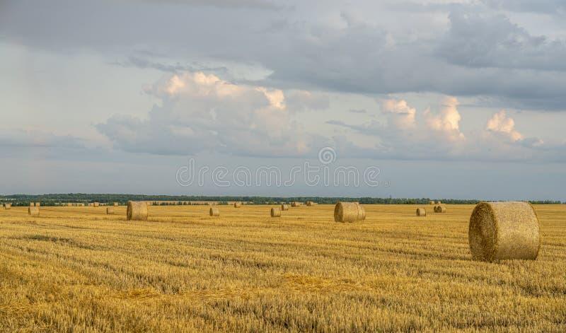 Aftonhimmel över ett slutta vetefält med stora rullar av sugrör royaltyfri bild