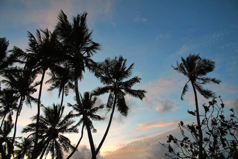 Aftonhimmel bak konturerna av högväxta palmträd på en tropisk ö i Maldiverna arkivbild