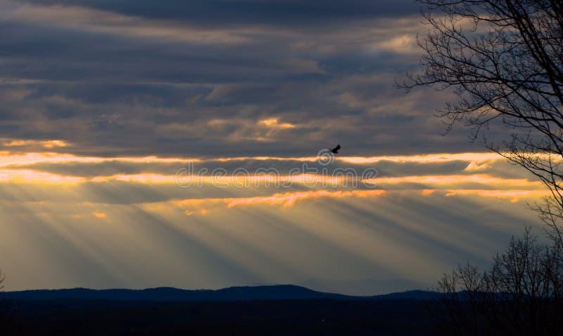 Aftonhimmel med rovfågeln royaltyfri fotografi