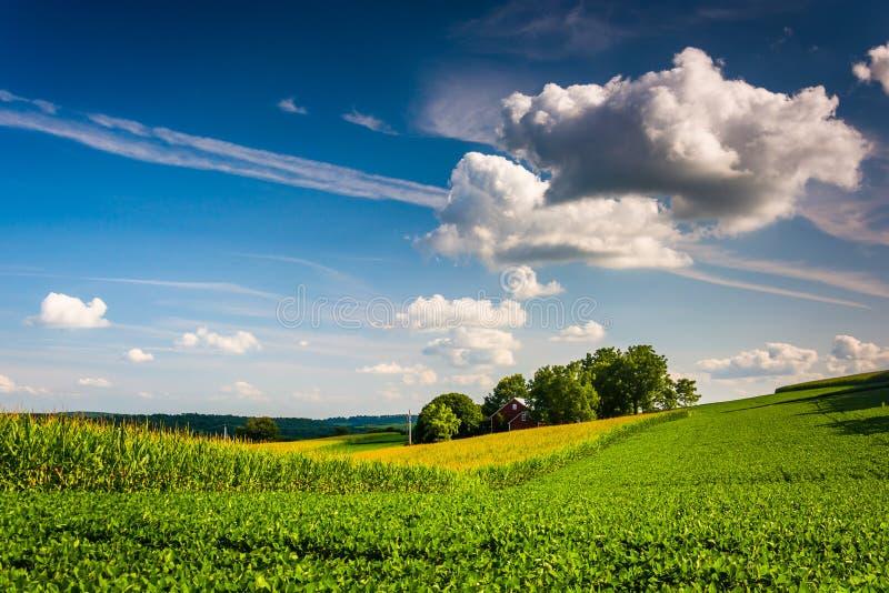 Aftonljus på ett lantgårdfält i lantliga York County, Pennsylvania arkivbilder