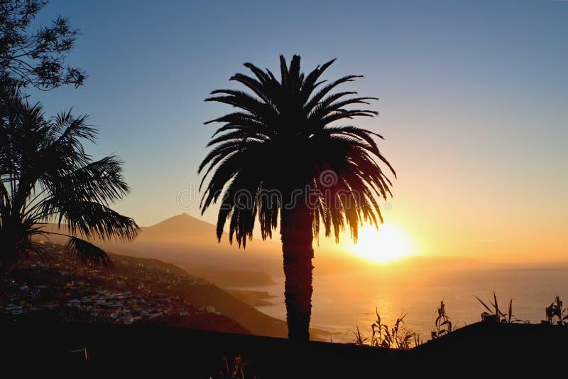 Aftonlynne i El Sauzal på ön av Tenerife med en sikt av monteringen Teide och en stor palmträd i förgrunden fotografering för bildbyråer