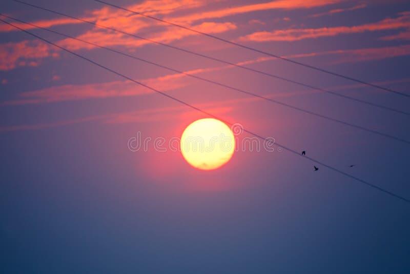 Aftonmelodi Solnedgång för gud` s fåglar like musikanmärkningssilhouettes royaltyfri fotografi