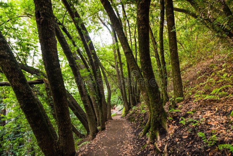 Aftonsikten av den fotvandra slingan i det villaMontalvo länet parkerar, Saratoga, San Francisco Bay område, Kalifornien arkivfoto