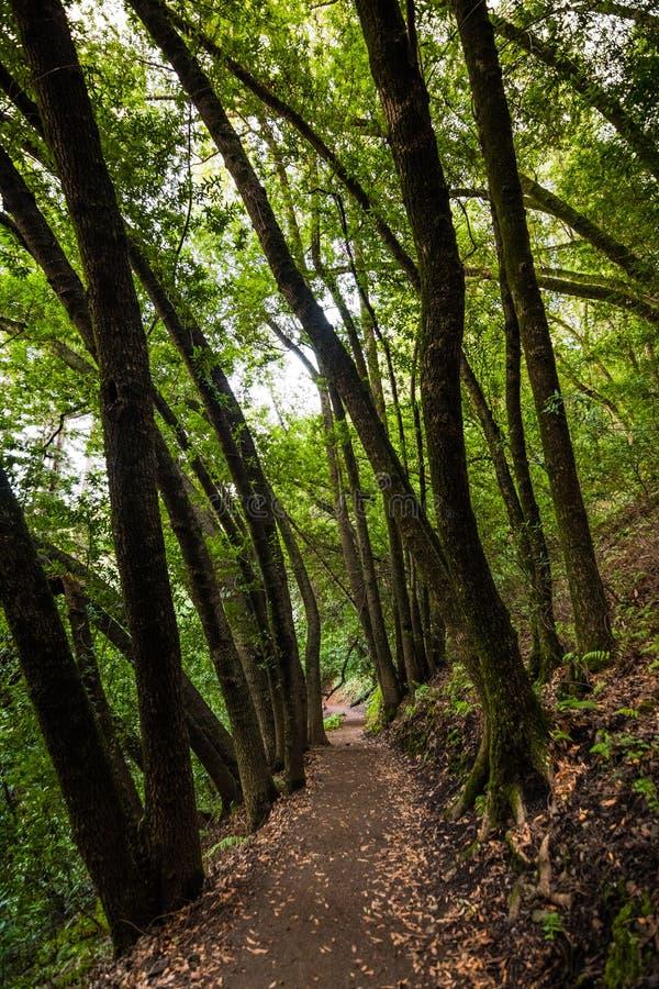 Aftonsikten av den fotvandra slingan i det villaMontalvo länet parkerar, Saratoga, San Francisco Bay område, Kalifornien royaltyfria bilder