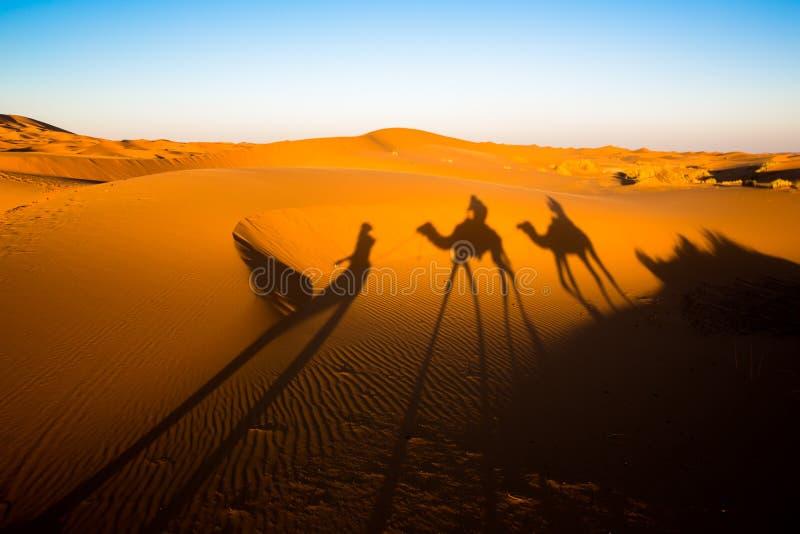 Aftonskuggor av en kamelhusvagn på Sahara arkivfoton