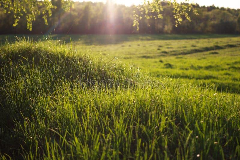 Aftonsol på gräset arkivbild