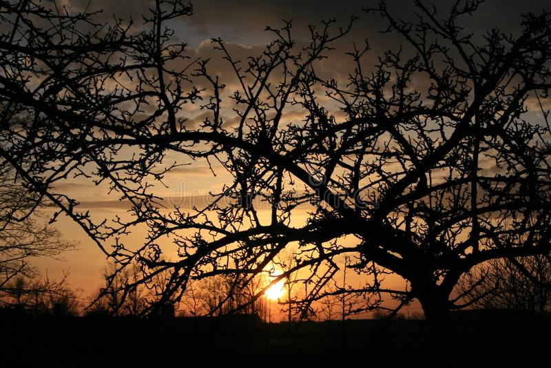 Aftonsolnedgång på en dekor av trädfilialer royaltyfri foto