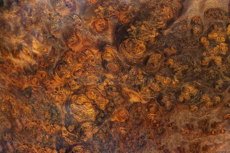 Afzelia burl drewno paskujący dla obrazka drukuje wewnętrznej dekoracji samochód, Egzotycznego drewnianego pięknego wzór dla rzem zdjęcie royalty free