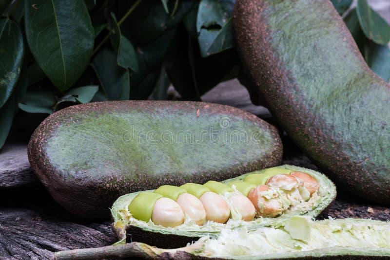 Download Afzelia Xylocarpa (Kurz) Craib 库存图片 - 图片 包括有 森林, 绿色: 72370337