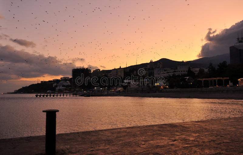 Against the backdrop of a bright orange sunset over the embankment of Yalta birds fly stock images