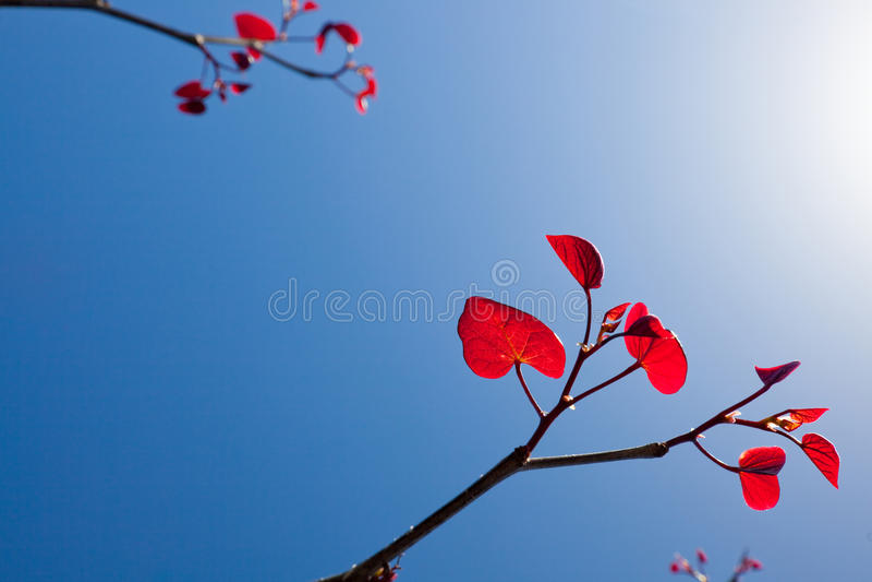 againtsbluen låter vara den röda skyen fotografering för bildbyråer