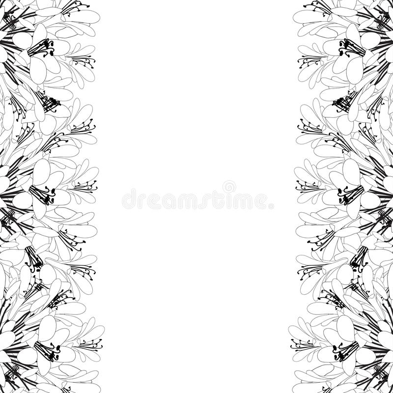Agapanthus Outline Border - Lily of the Nile, African Lily. Vector Illustration. isolated on White Background. Agapanthus Outline Border - Lily of the Nile vector illustration