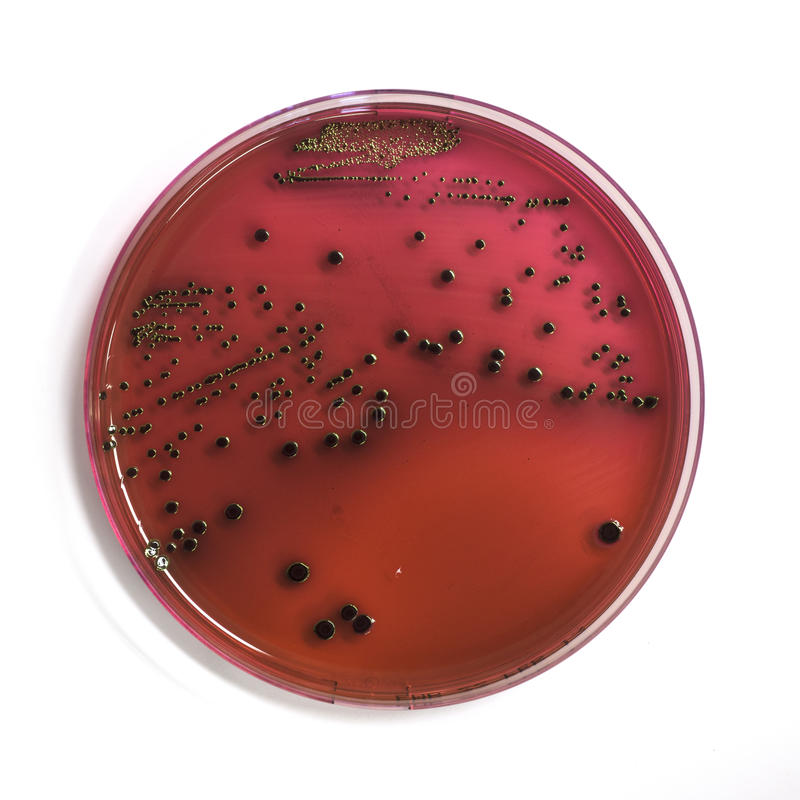 Download Micro organisms stock image. Image of healthcare, dish - 29789781