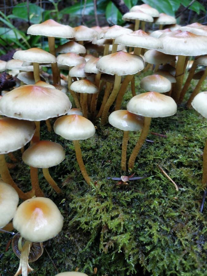 蘑菇,真菌,可食的蘑菇,Agaricomycetes 图库摄影