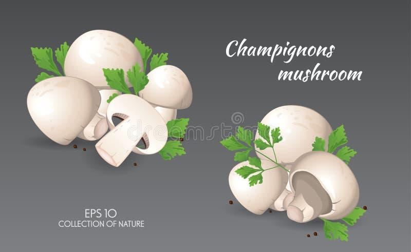 Agaricus campestris mit Petersilie stock abbildung