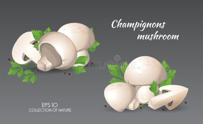 Agaricus campestris mit Petersilie lizenzfreie abbildung