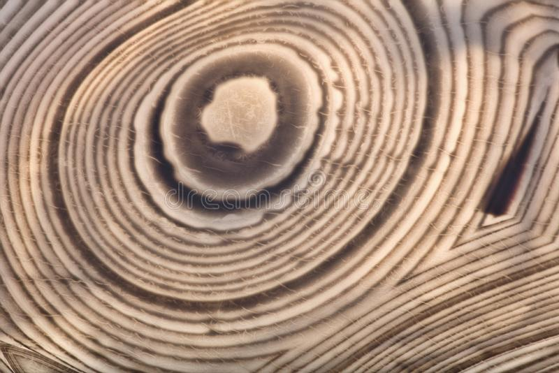 Agate light and dark brown concentric lines. Background with contrast agate structure stock photo