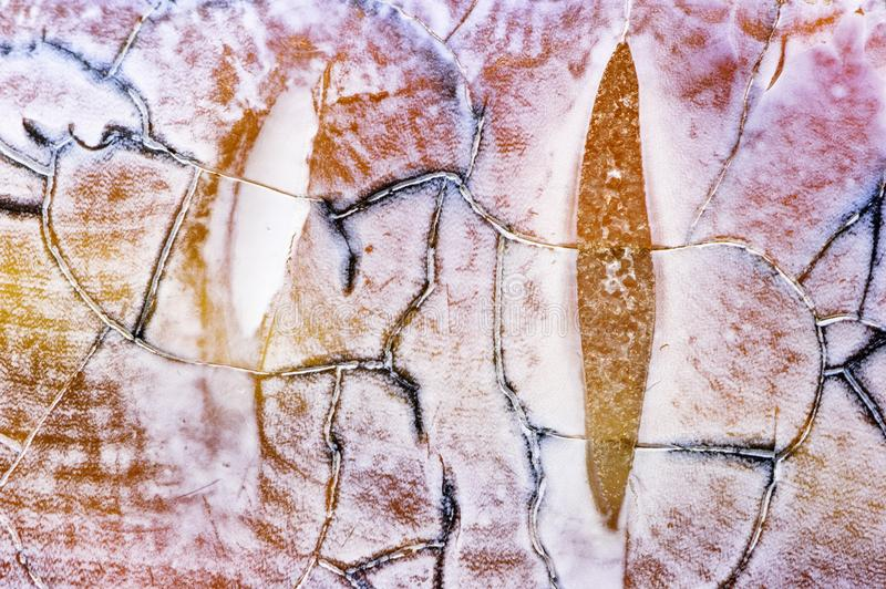 Agate stone texture stock images