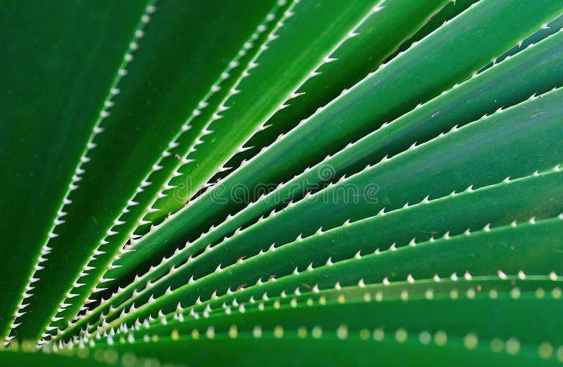 Download Agava stock image. Image of gardening, natural, background - 18309101