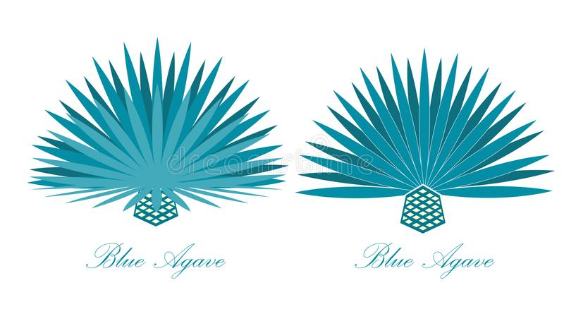 Agave azul ou ou planta da agave do tequila Jogo da ilustração do vetor ilustração stock