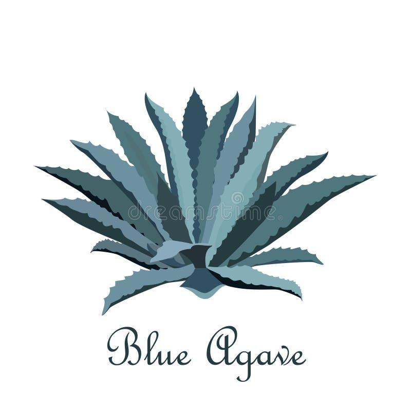 Agave do azul do Tequila Ilustração realística do vetor para a etiqueta, cartaz, Web ilustração stock