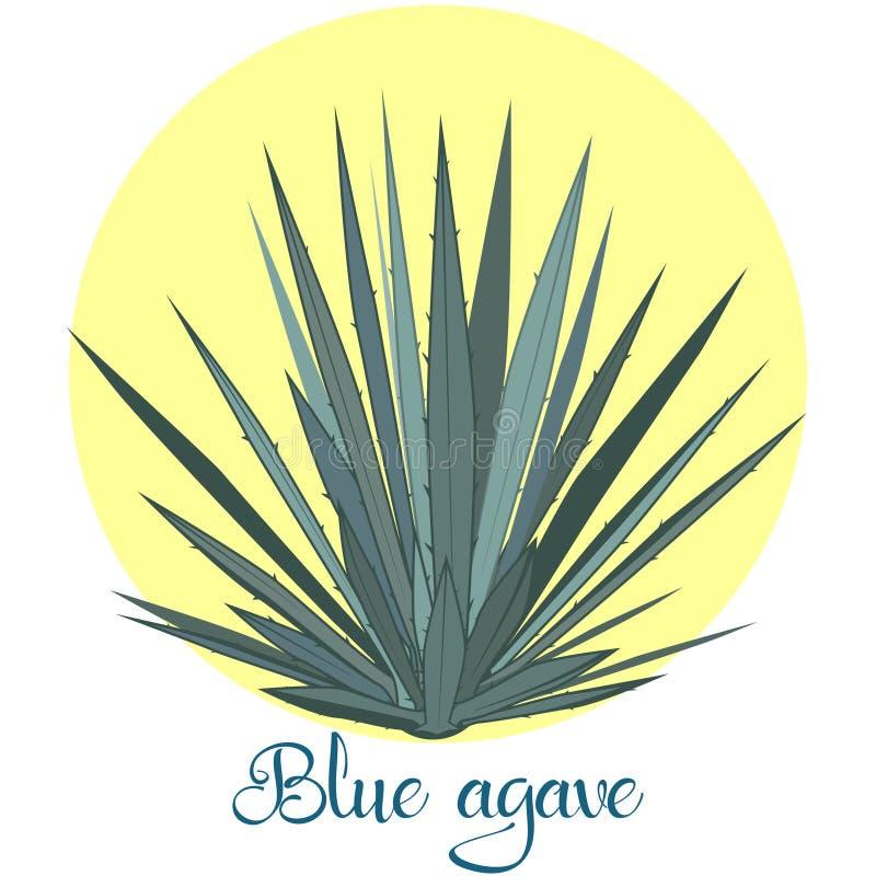 Agave do Tequila ou ilustração azul do vetor da agave ilustração do vetor