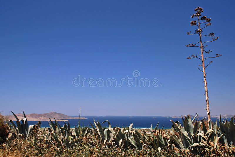 agave greece arkivfoto