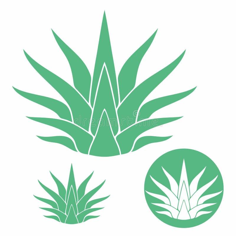 Agave vector illustration