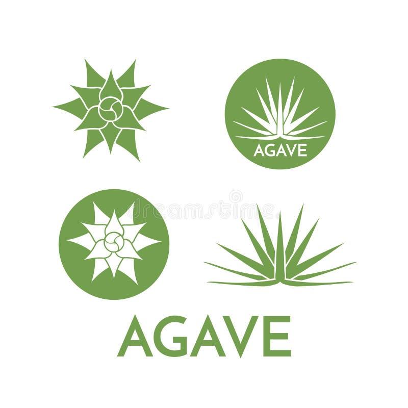 Agave plant green flower logo colorful vector illustration. Symbol set vector illustration