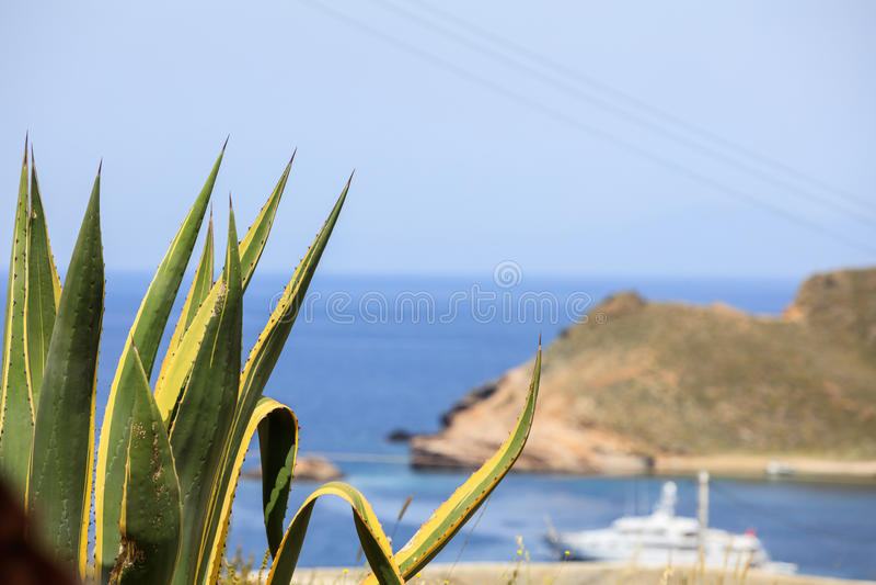 Agave plant over a Greek island coast stock image