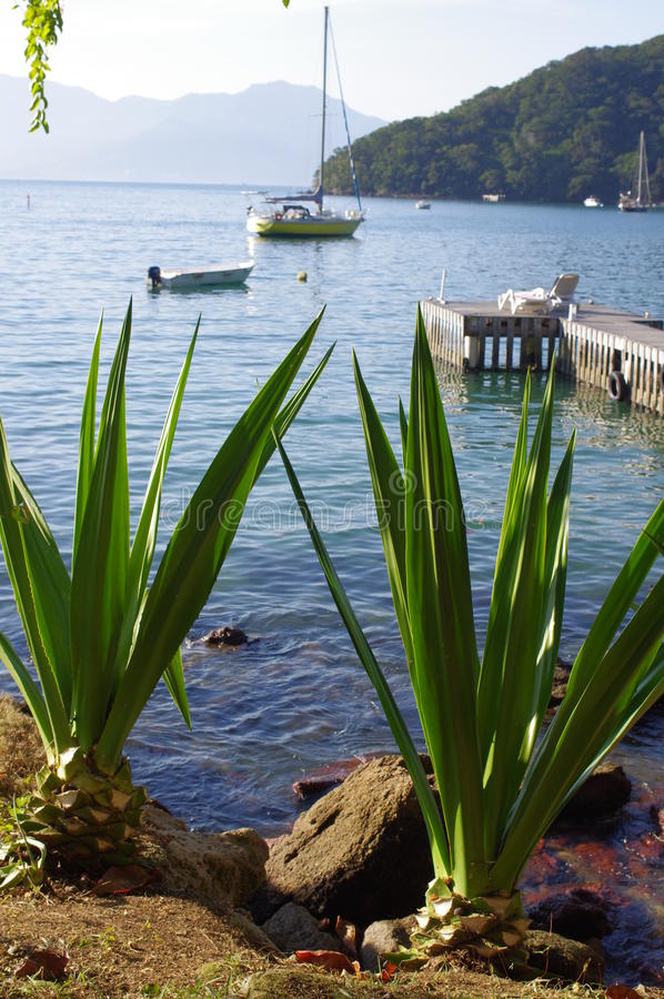 Agave plants by the bay royalty free stock photography