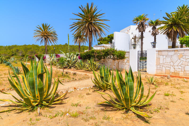 Agave plants growing in front of a house stock photography