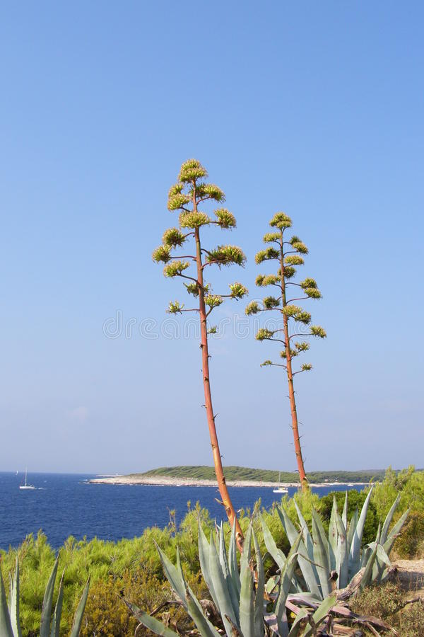 Agave plants and sea landscape stock photography