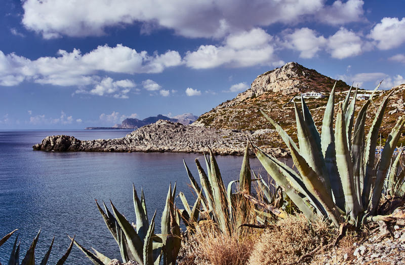 Agave on the rocky coast of the Mediterranean Sea. On the island of Rhodes stock image