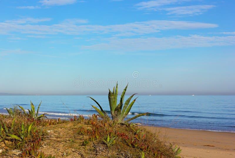 Agaveinstallaties bij strandrand stock foto's