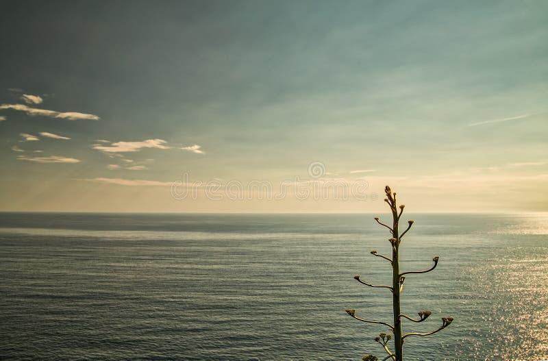 Agawy drzewo fotografia royalty free